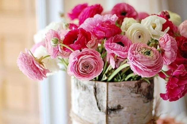 Цветы картинки красивые пионы